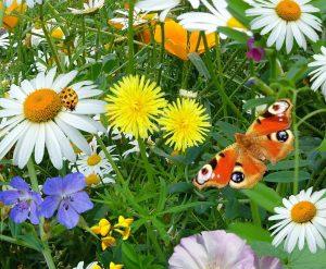 wild_flowers_wild_plants_nature